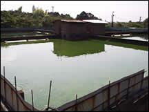 すっぽん養殖池写真